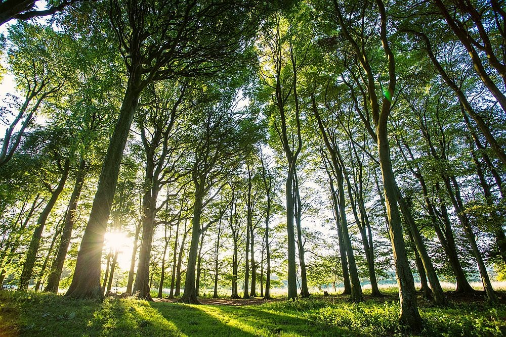 Trees in South Downs National Park