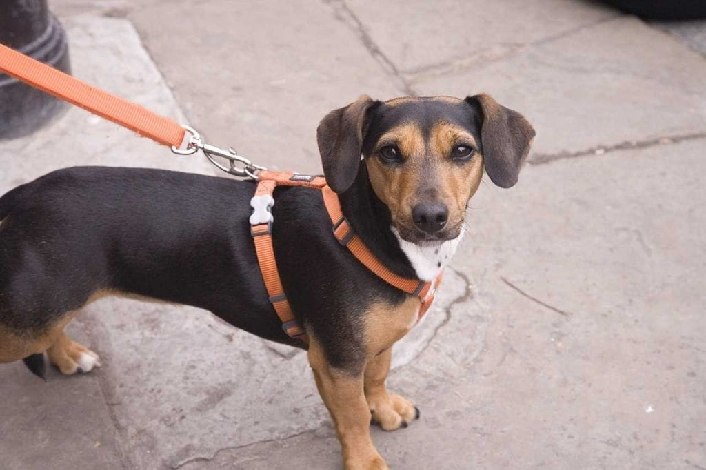Delinquent dog owners could be at risk of a £100 fine