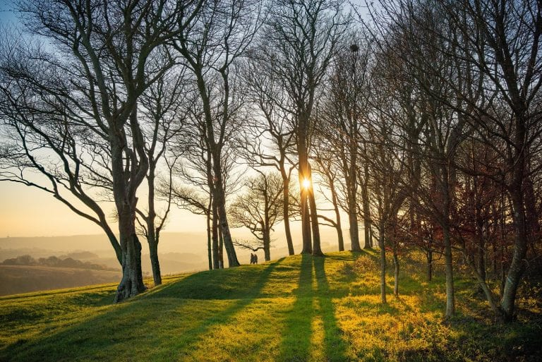 Chanctonbury Ring by Tim Kahane - WINNER of 2020 competition